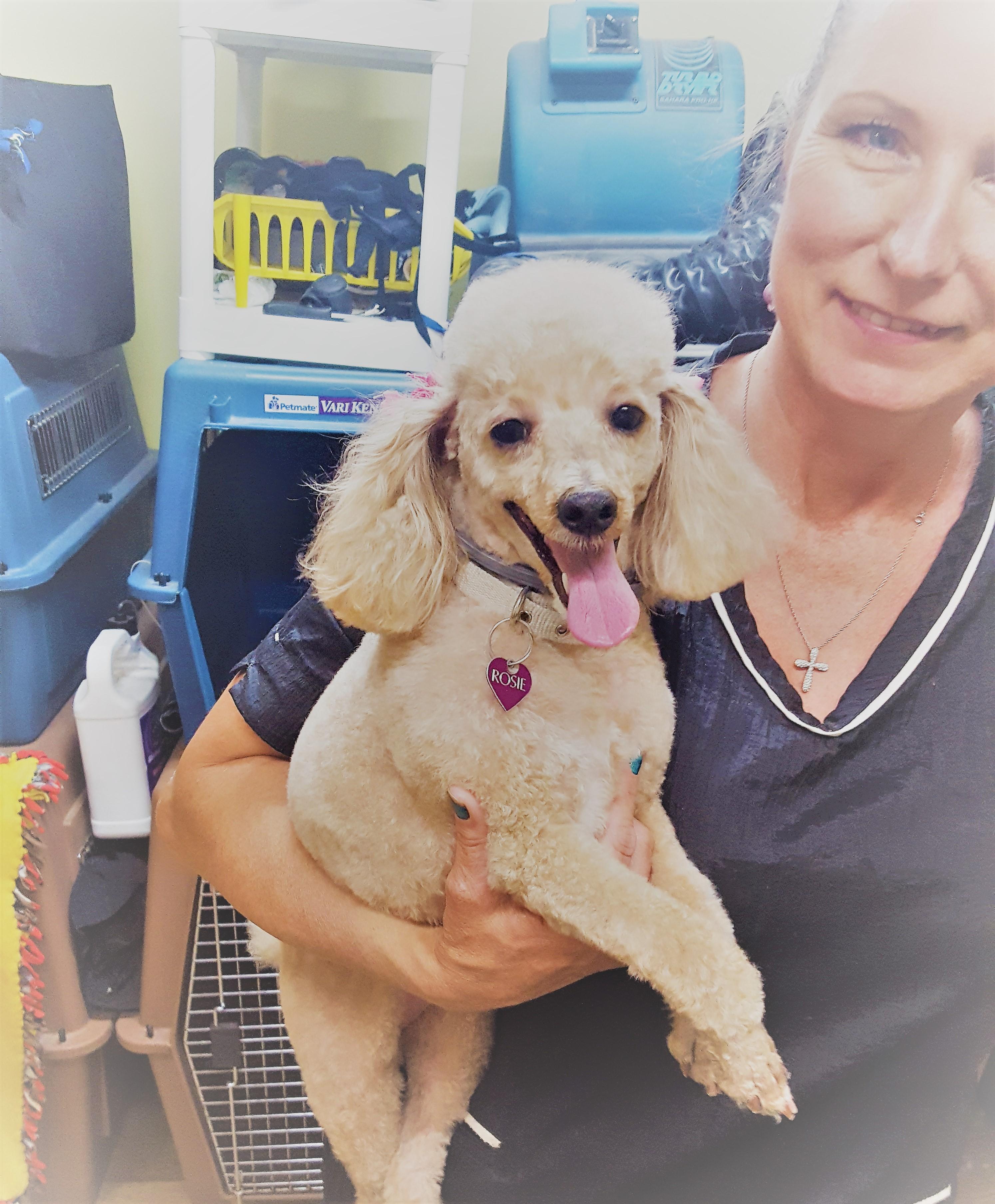 Dapper Dog Grooming Salon